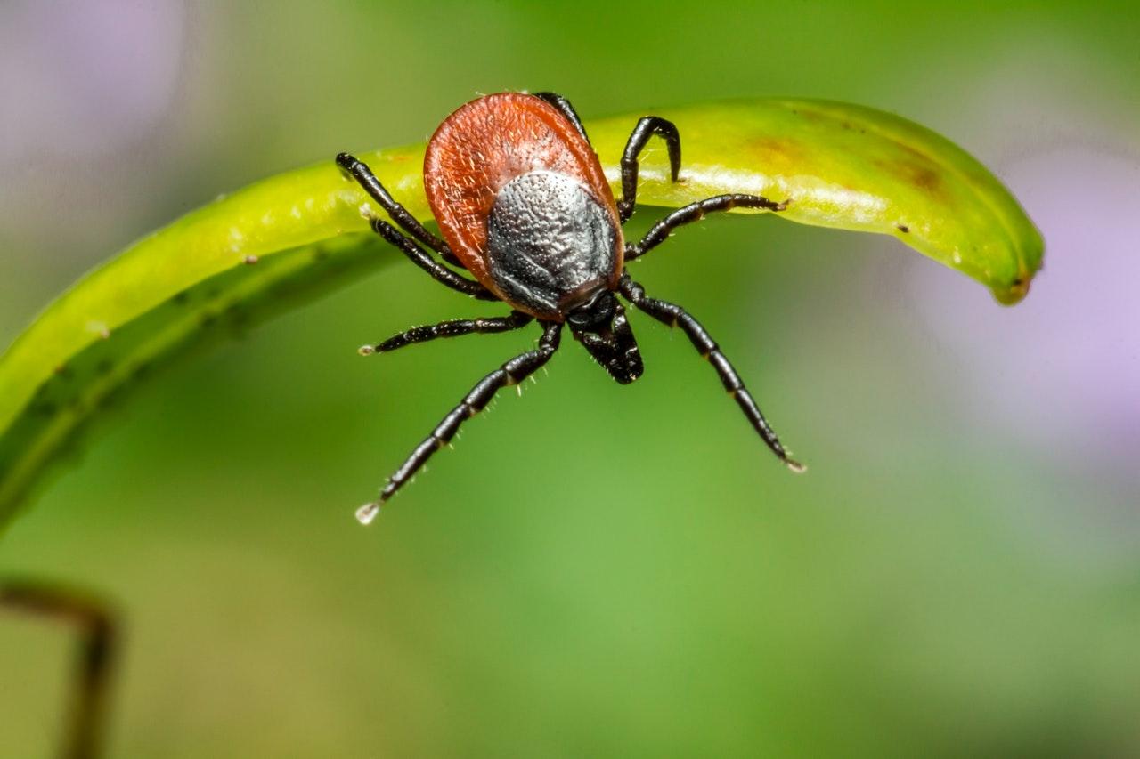 Ziekte van Lyme behandeling